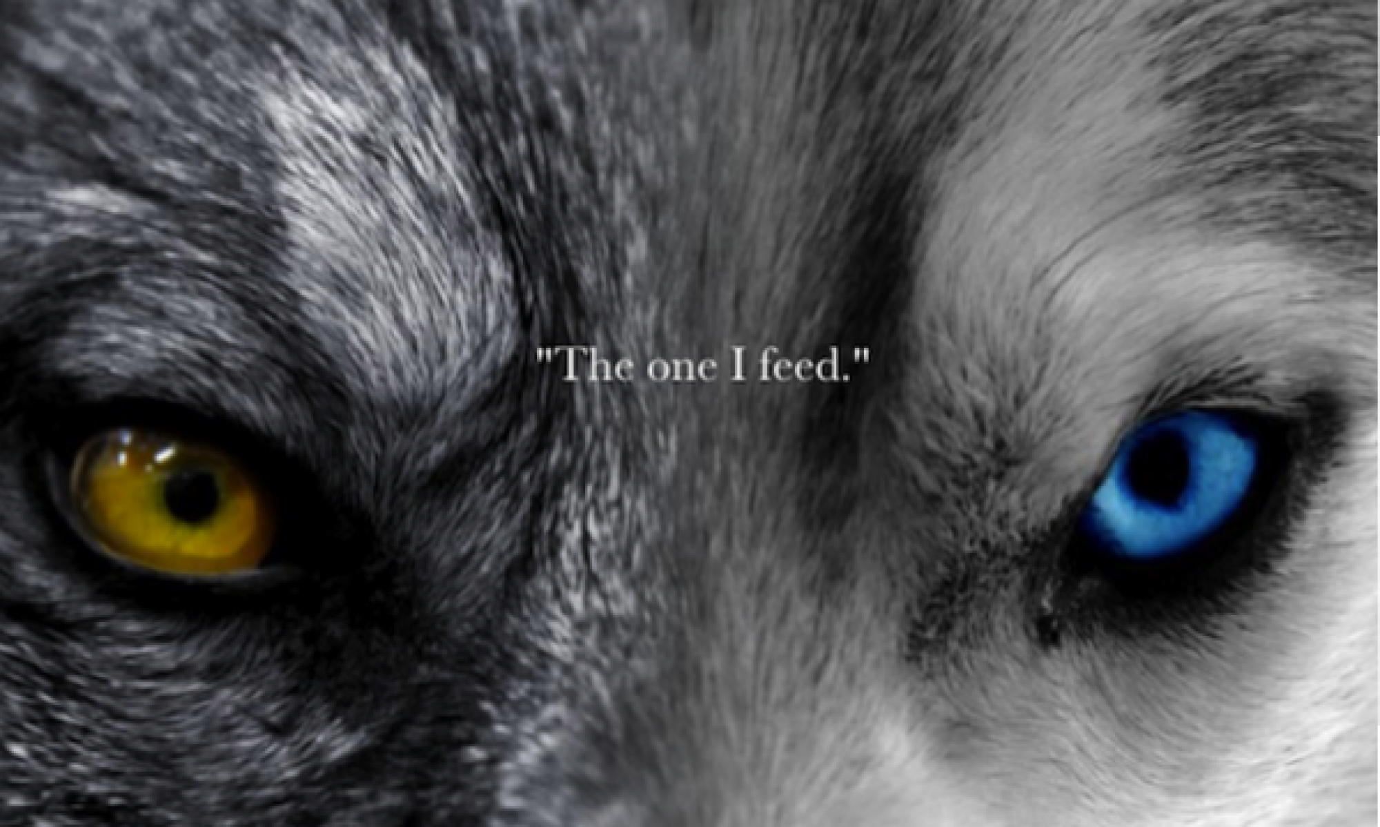 The good wolf,choose to feed him